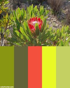 Western Cape Fynbos, South Africa Color Scheme