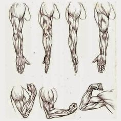 como dibujar un brazo - Buscar con Google