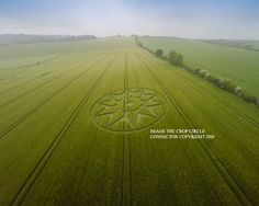 Crop Circle at Willoughby Hedge, Nr Mere, Wiltshire. Reported 5th June 2016