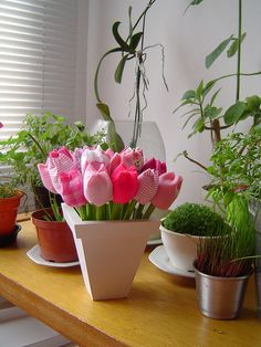 Tulipas by pimpim salabim, via Flickr