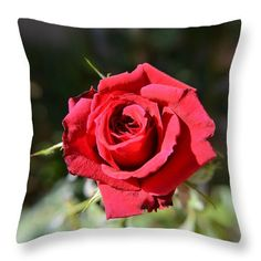 Red Rose Landscape Throw Pillow for Sale by Aimee L Maher Photography and Art Visit ALMGallerydotcom #homedecor #livingroom #flower