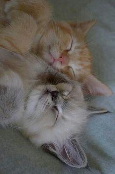 Precious little sleeping kittens