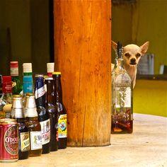 So, a dog walks into a bar and....