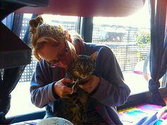 Tiguer en el salón de belleza! Toca #pedicura   Amamos a nuestros #gatos