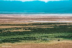 You can't describe the magnificence, the beauty and natures abundance that envelopes you when you descend into the Ngorongoro Crater. 🇹🇿 If this on your dream list of places to see, check out our best tours 👀👇 Mount Kilimanjaro, Tanzania Safari, African Safari, Abundance, Envelopes, Places To See, Dreaming Of You, Waves, Tours