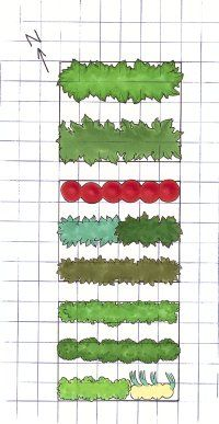 Designing a Vegetable Garden Plot.