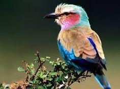 Afbeeldingsresultaat voor afbeelding vogels en natuur