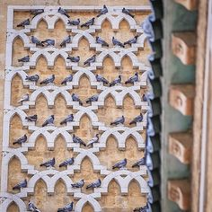 The #Medina of #Tunis  _  For more #Photos visit my #Facebook page >>> Wael Bouyahya Photography _ #Street #StreetPhotography #LaMedina #Pigeons #Birds #Tunisia #Crafts #Vscocam #Vsco #Canon #Urban #Authentic #Folk #Igers #Bestoftheday #Picoftheday #Photooftheday #Likeforlike #Tagsforlikes @natgeo _