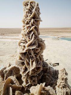 Large desert rose formation in the Tunisian desert