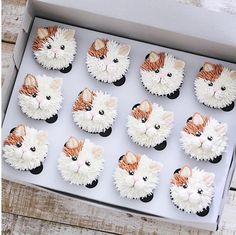 Ich bin dabei, 103 Kommentare - Brooke Haven (brookiescookiesco) en Instag - Food Art - Kitty Cupcakes, Animal Cupcakes, Puppy Cupcakes, Cake Decorating Techniques, Cake Decorating Tips, Cookie Decorating, Frost Cupcakes, Flower Cupcakes, Kitty Party