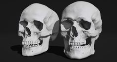 Skull Sketcher —Artist Friendly Anatomy Tools. Free download: http://www.anatomy360.info/skull-sketcher/