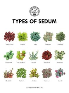 "Sukkulenten Common kinds of Sedum Use the code ""LOVEPLANTS"" for a low cost in your first order # Plants, Succulents, Sedum, Succulent Terrarium, Garden Types, Trees To Plant, Low Maintenance Plants, Plant Identification, Types Of Succulents"