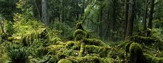 Visiting the Hoh Rain Forest - Olympic National Park (U.S. National Park Service)