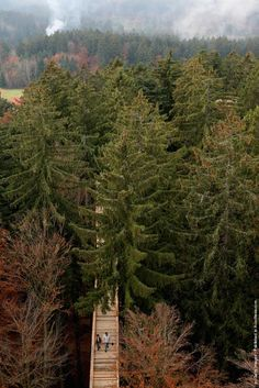 World's Longest Tree Top Walk in Bavaria