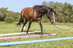 Denksportaufgaben für Pferde Natural Horsemanship, Horse Training, Horse Love, Horseback Riding, Fur Babies, Equestrian, Horses, Animals, Life