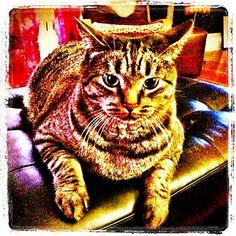 Scootie! #cat #kitty