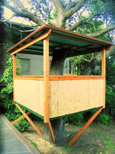 Crazy Tree House Tree House In The Middle Of A Fir