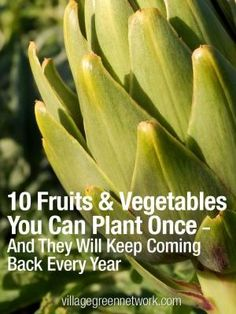 10 Fruits & Vegetables You Can Plant Once -- And They Will Keep Coming Back Every Year. My Kitchen Outfit promises that you will be inspired by growing vegetables.