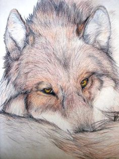 Drawn wolf! So cute!