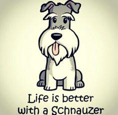 Life is better with a schnauzer. Mini Schnauzer Puppies, Schnauzers, Schnauzer Puppy, Giant Schnauzer, Standard Schnauzer, Cute Puppies, Dogs And Puppies, Cute Dogs, Doggies