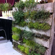 DIY...Re Cycled Wood Palet Used To Plant A Vertical Garden.