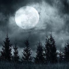 bosque de noche con luna llena - Pesquisa Google