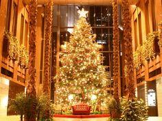 Gorgeous Giant Christmas Tree