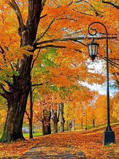 New England Autumn | Express Photos