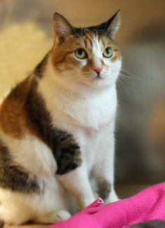 Meet Sadie Rose Grace! This sweet and silly lady is looking for a loving home.