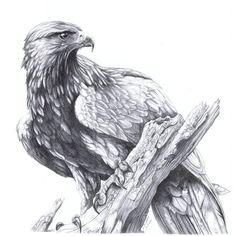 Aquila chrysaetos by harpyja on DeviantArt