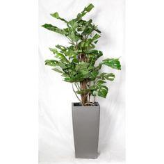 Philo Split vine plant peikonlehti 120 cm