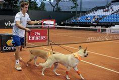Que bonito es el juego de tennis, que promueve la adopcion http://perrocontento.com/2016/02/perros-trabajan-en-torneo-de-tennis-en-brasil-para-ser-adoptados/