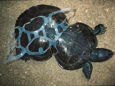 Amazing story - Saltwater Brewery invents a six-pack holder that is biodegradable and can be eaten by sea turtles.
