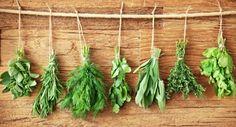 boli de plante medicinale pe bază de plante pete roșii de pe corp rănesc articulațiile