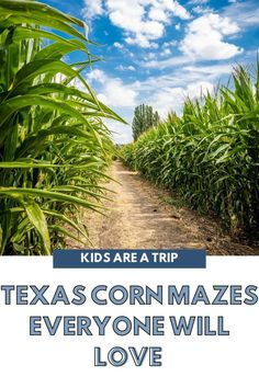 If you are looking for fall fun, why not head to a spooky corn maze? Or a fun corn maze for all ages? These corn mazes in Texas shouldn't be missed! - Kids Are A Trip |corn maze Texas| fall in Texas| Texas fall fun| Texas travel Family Vacation Destinations, Family Vacations, Amazing Destinations, Family Travel, Travel Destinations, Family Road Trips, Road Trip Usa, Toddler Travel, Travel With Kids