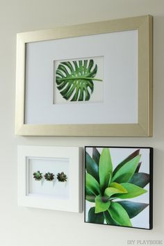 Framed prints on a gallery wall. Looking for some gallery wall prints? Check out these awesome free prints, frame them, and hang 'em proud! Start your gallery wall with style. Plus, we love the greenery and fresh green color from these palm print and succulent photographs #succulents #palmprint #freeprintable #wallart #gallerywall #freephotos