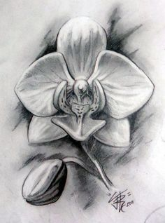 orchid by zeroxy92 drawing lessons pinterest orchid flowers drawing flowers and white orchids. Black Bedroom Furniture Sets. Home Design Ideas