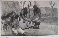 Vanika Drinking Tambo Kenya