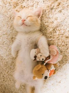 Super Cute Animals, Cute Little Animals, Cute Funny Animals, Cute Cats And Kittens, Cool Cats, Kittens Cutest, Funny Animal Memes, Cat Memes, Beautiful Cats