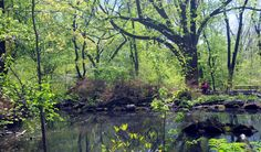 A thriving wildlife habitat, the Ramble is the center of birding activity in the Park. Over 230 species migrate through, and over 40 others remain in the Park year round.