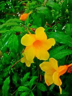 Las gotas de agua en ellas, las flores.