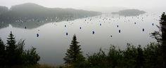 Newfoundland- Trinity Bay | Nature Notes