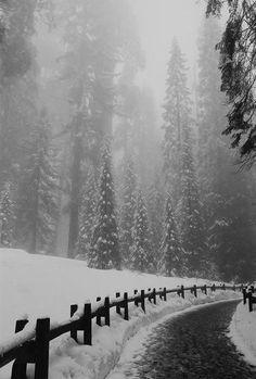Gorgeous snow...
