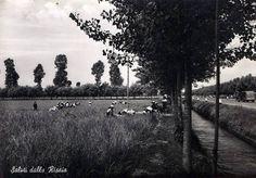 Al lavoro tra le risaie. #riso #mondariso #storia #Milano #Pavia #storia #Lomellina