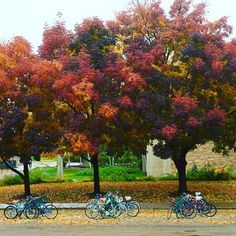 Fall at Colorado State University is unmatched.