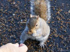 esquilo e amendoim