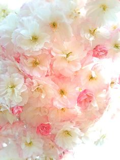 All the rosy, pink and adorable loveliness of the pastel world with a personal sprinkle Flowers Nature, Pink Flowers, Beautiful Flowers, Blossom Trees, Cherry Blossoms, Spring Blossom, Everything Pink, Flowering Trees, Pretty Pastel