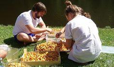 Konspiratives Kochkollektiv im Mühlviertel: Gelinaz! Anna, Goulash, Sorting, Beer, Cooking