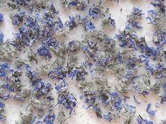Fleurs de Bourrache cristallisées - Semences-Partage.net Image, Table, Gardens, Edible Plants, Home Made, Natural Health, Canning, Tables, Desk
