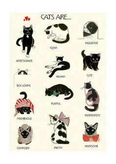 Love this poster. Found on Etsy. Educational adjective wall art - Cat Lovers print - Cat Art - Cat wall art - Cat print - X I Love Cats, Crazy Cats, Cute Cats, Funny Cats, Warrior Cats, Cat Anime, Matou, Cat Wall, Cat Facts